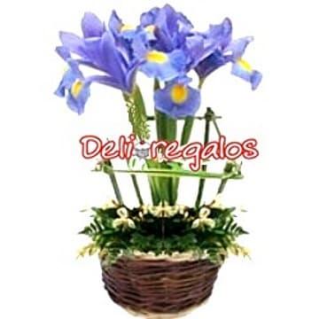 Deliregalos.com - Jardin de Iris - Codigo:AGT39 - Detalles: en base de cer�mica conteniendo rustico cerco de madera y que en su interior tiene un ramillete de Iris, flores y follaje de estacion.  - - Para mayores informes llamenos al Telf: 225-5120 o 476-0753.