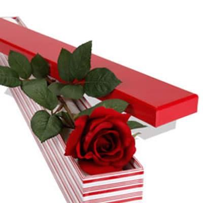 5 Cajas de una Rosa
