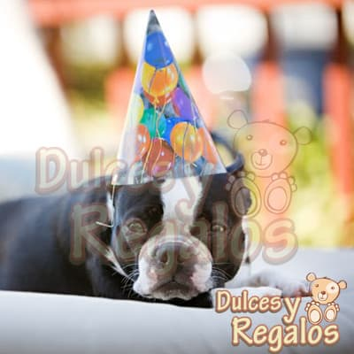 Diloconrosas.com - Gorros para  50 perritos - Codigo:TMC14 - Detalles: 50 Gorritos de papel con elastico. - - Para mayores informes llamenos al Telf: 225-5120 o 476-0753.